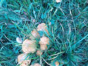 grzyby3-Agroturystyka